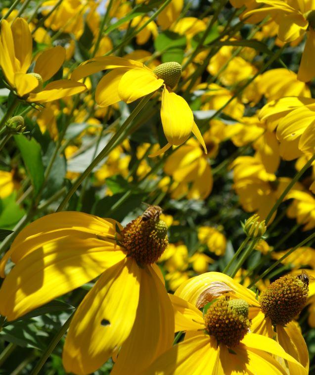 Swiss Bees
