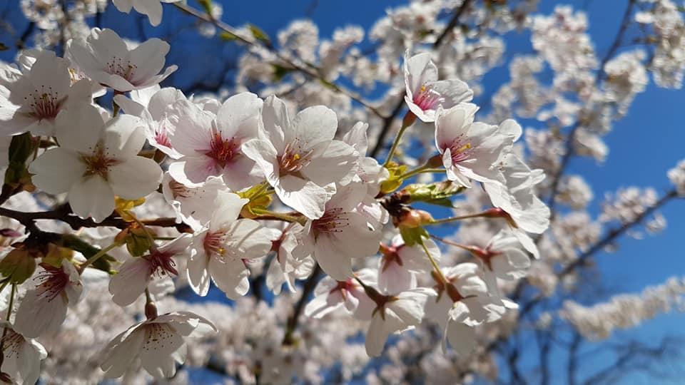 Celebrate Spring2021